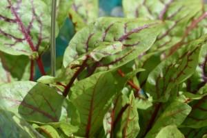 有先兆流产的迹象能吃血皮菜吗引起先兆流产的原因有哪种