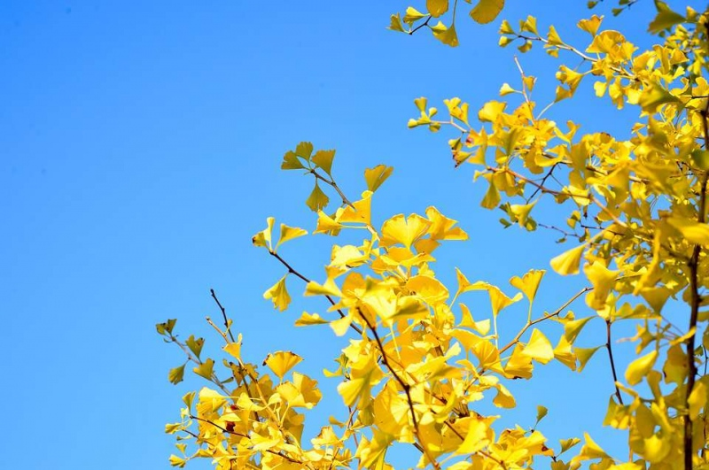 秋天宝宝皮肤变黄宝宝皮肤发黄的原因